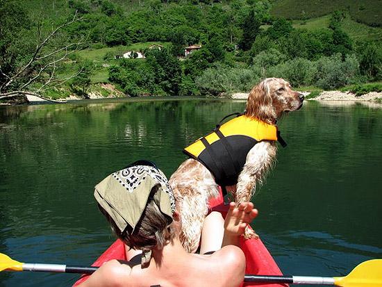salvavidas perros canos sella